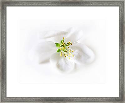 Whiter Shade Of Pale Framed Print by Jessica Jenney
