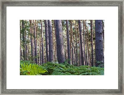 Woods Framed Print by David Isaacson