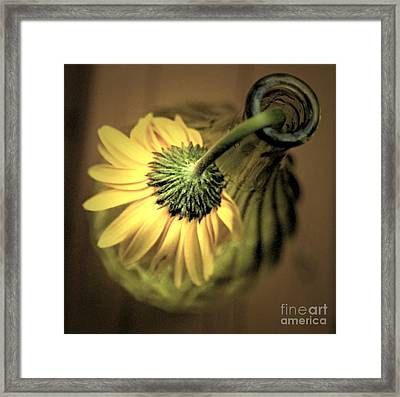 Yellow Framed Print by Amanda Barcon