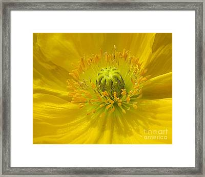 Yellow Macro Framed Print by Chris Anderson