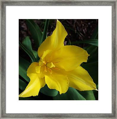 Yellow Surprise Framed Print by Bruce Bley