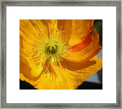 Yellow Wonder Framed Print by Bruce Bley