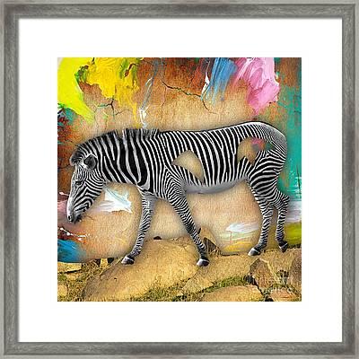 Zebra Collection Framed Print by Marvin Blaine