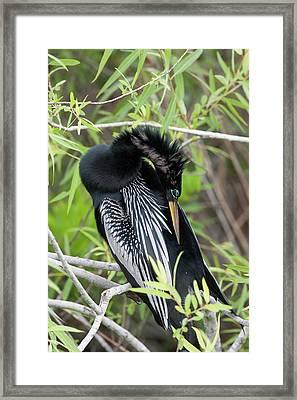 Usa, Florida, Everglades National Park Framed Print by Jaynes Gallery