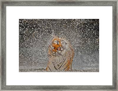 2012 Nat Geo Photo Contest Winner Framed Print by Ashley Vincent