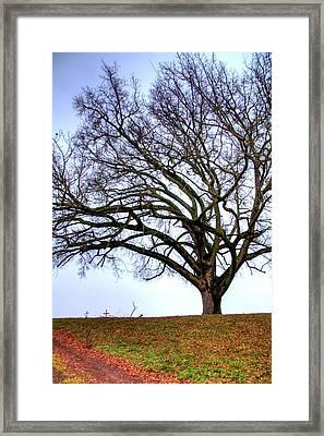 20708 3 Framed Print by Jerry Sodorff