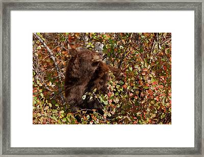 Usa, Wyoming, Grand Teton National Park Framed Print by Jaynes Gallery