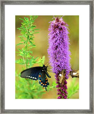 237 Butterfly Framed Print by Marty Koch