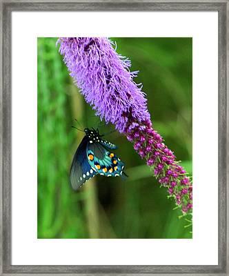 243 Butterfly Framed Print by Marty Koch