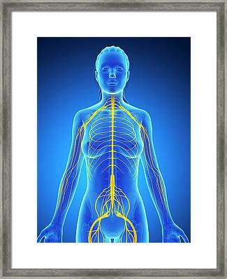 Female Nervous System Framed Print by Sebastian Kaulitzki