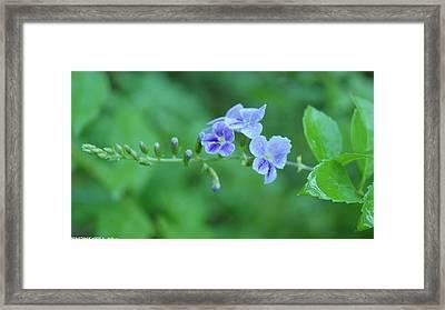 Flowers For You  Framed Print by Gornganogphatchara Kalapun