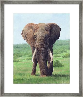 African Elephant Framed Print by David Stribbling