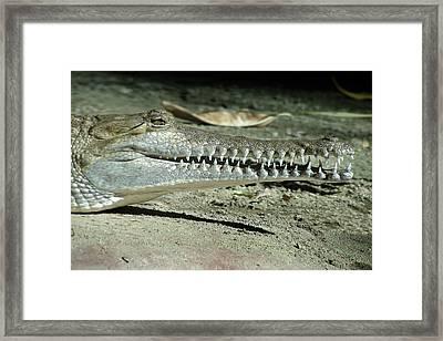 Alligator Camouflage Framed Print by Christine Till