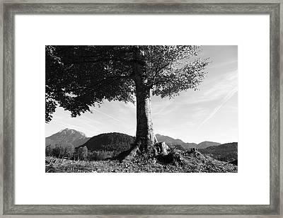 Alpine Tree Framed Print by Falko Follert
