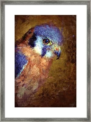 American Kestrel Falco Framed Print by Robert Jensen