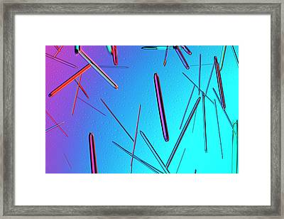 Amoxicillin Crystals Framed Print by Antonio Romero