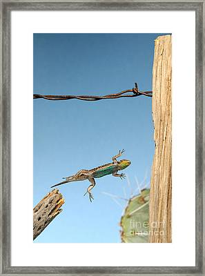 Arizona Fence Lizard Framed Print by Scott Linstead