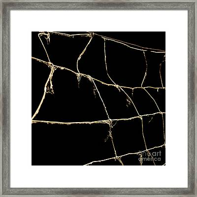 Barbed Wire Framed Print by Bernard Jaubert