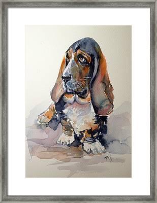 Basset Hound Framed Print by Kovacs Anna Brigitta