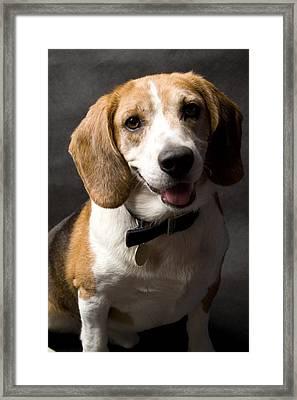 Beagle Framed Print by Gary Marx
