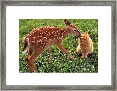 Best Friends Framed Print by Thomas R Fletcher