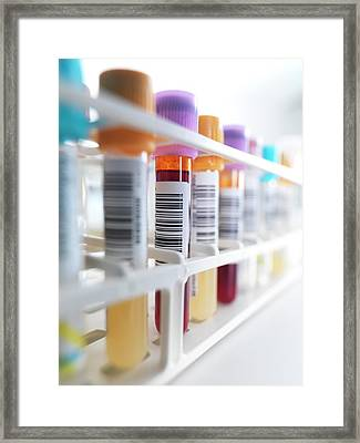Blood Samples In Rack Framed Print by Tek Image