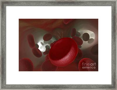 Bloodstream Framed Print by Science Picture Co