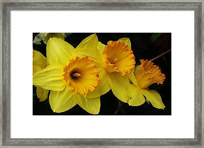 3 Blossoms In A Row Framed Print by Bruce Bley
