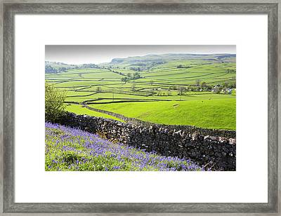 Bluebells Growing On A Limestone Hill Framed Print by Ashley Cooper