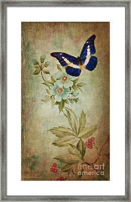 Butterfly Framed Print by Angela Doelling AD DESIGN Photo and PhotoArt