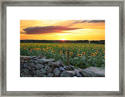 Buttonwood Farm Framed Print by Andrea Galiffi