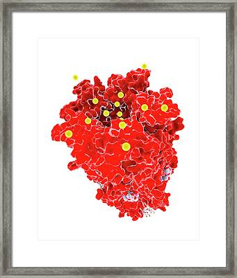 Chloride Channel And Ivermectin Complex Framed Print by Ramon Andrade 3dciencia