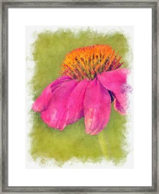Coneflower Echinacea Framed Print by Robert Jensen