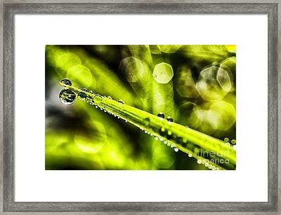 Dew On Grass Framed Print by Thomas R Fletcher