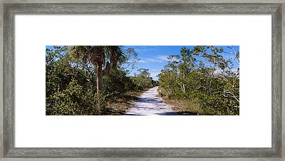 Dirt Road Passing Through A Forest Framed Print by Panoramic Images
