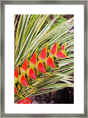 Dominica, Roseau, Tropical Vegetation Framed Print by Walter Bibikow