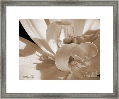 Double Late Tulip Named Angelique Framed Print by J McCombie