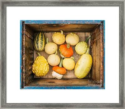 Fall Framed Print by Viktor Pravdica