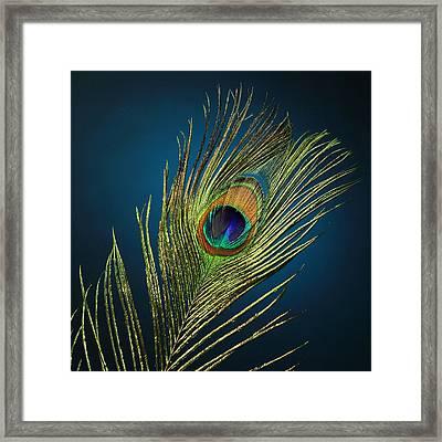 Feathers Framed Print by Mark Ashkenazi