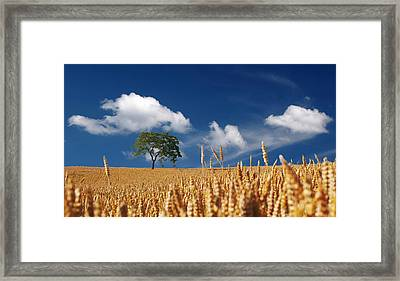 Fields Of Grain Framed Print by Mountain Dreams