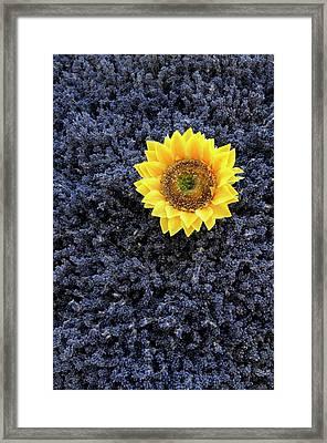 France, Provence-alpes-cote D'azur Framed Print by Kevin Oke