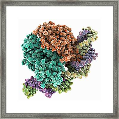 Gene Activator Protein Framed Print by Science Photo Library