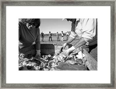 Griffon Vulture Conservation Framed Print by Nicolas Reusens