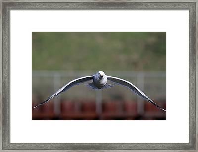 Gull Framed Print by Jim Nelson