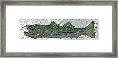 Gyotaku - Striped Bass - Rock Fish - Striper Framed Print by Jeffrey Canha