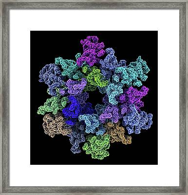 Hiv-1 Capsid In Intact Virus Particle Framed Print by Alfred Pasieka