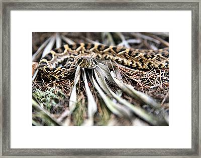 On His Level Framed Print by JC Findley