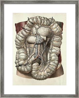 Large Intestine Framed Print by Science Photo Library