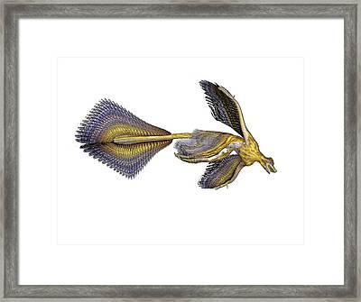 Microraptor Dinosaur Framed Print by Friedrich Saurer