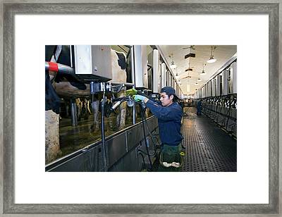 Milking Parlour Framed Print by Jim West